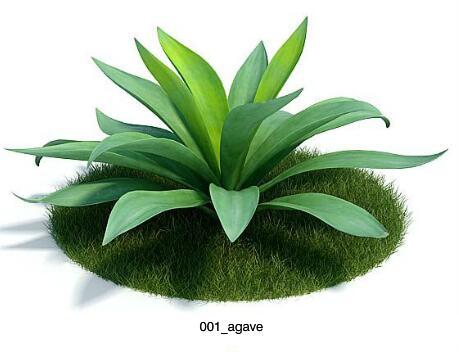 (EV模型库)Archmodels vol. 61 植物-树模型