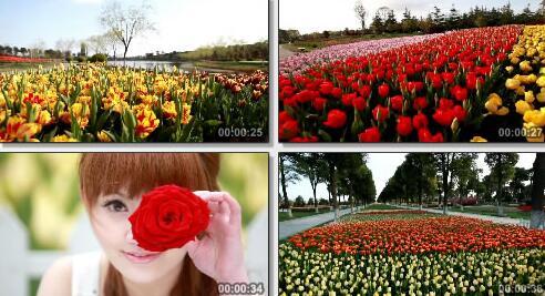 公园花圃实拍片段